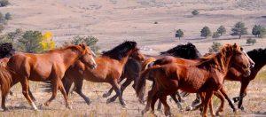 wild-horses-1140x500