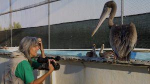 Pelican-Dreams-In-the-Aviary